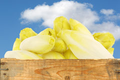 Fresh chicory in a wooden crate Royalty Free Stock Images