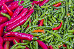 Fresh chili background Stock Image