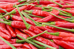 Fresh chili peppers Royalty Free Stock Image