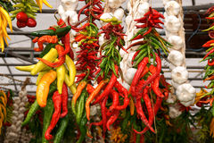 Fresh chili peppers and garlic Royalty Free Stock Photography