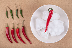 Fresh chili peppers with ice on plate Stock Image