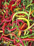 Fresh chilies Stock Photography