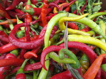 Fresh chilies Royalty Free Stock Photography