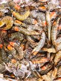 Fresh chilled prawns on ice. Studio Photo Stock Images