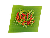 Fresh chilli on banana leaf Royalty Free Stock Images