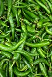 Fresh chilli peppers Stock Photography
