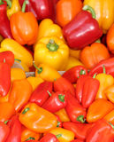 Fresh Chilli Peppers. Stock Photo
