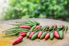 Fresh chilli Royalty Free Stock Images