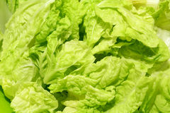 Fresh chinese cabbage background Royalty Free Stock Photos