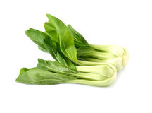 Fresh Chinese Cabbage or Bok Choy On White Royalty Free Stock Image