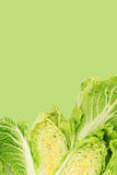 Fresh chinese cabbage and a cut one Royalty Free Stock Images