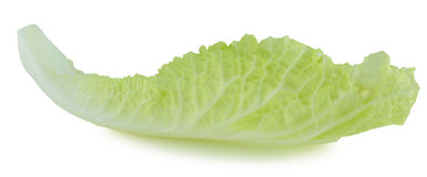 Fresh chinese cabbage and a cut one on a white background Stock Image