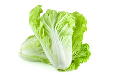 Fresh chinese cabbage and a cut one on a white background Royalty Free Stock Images