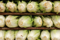 Fresh Chinese cabbage in the market ready for sale Royalty Free Stock Photo