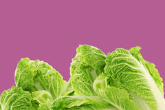 Fresh chinese cabbage on a purple background Stock Photos