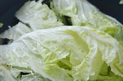 Fresh Chinese cabbage water cleaning in plastic basin royalty free stock photography