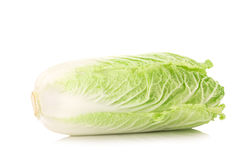 Fresh chinese cabbage on a white background.  Stock Images