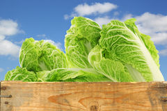 Fresh chinese cabbage in a wooden crate Stock Photos