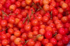 Fresh chinese cherry Stock Photography
