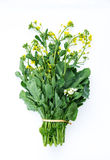 Fresh chinese flowering cabbages Stock Photos
