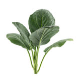 Fresh chinese kale vegeables isolated on white Royalty Free Stock Photography