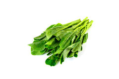 Fresh chinese kale vegetables isolated on white Royalty Free Stock Photos