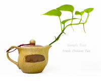 Fresh Chinese tea with teapot and green leaves. In white back ground Stock Photo
