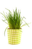 Fresh chive Royalty Free Stock Photos