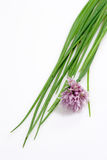 Fresh Chive. On white Background royalty free stock images