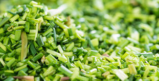 Fresh Chive Backround Stock Photos