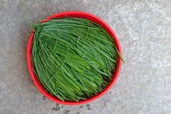 Fresh chive. Chopped chives in red bowl. Fresh green edible herb of Allium schoenoprasum. stock photo
