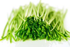 Fresh chives Stock Image