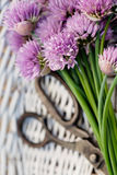 Fresh chives flower Stock Photos
