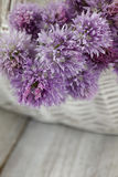 Fresh chives flower Stock Photo