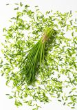 Fresh chives Royalty Free Stock Photography