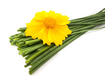 Fresh chives and yellow flower Royalty Free Stock Photos
