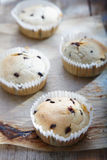 Fresh choc chip cupcakes Royalty Free Stock Photography
