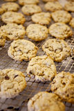 Fresh Chocolate Chip Cookies Stock Images