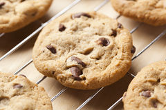 Fresh Chocolate Chip Cookies Royalty Free Stock Images