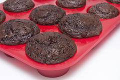 Fresh chocolate muffins Royalty Free Stock Photo