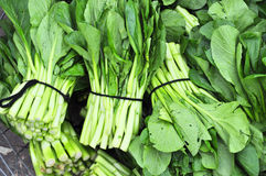 Fresh choi sum Stock Photo