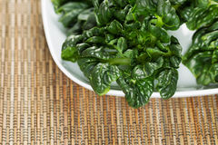 Fresh Choy ready for Cooking Royalty Free Stock Image