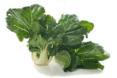 Fresh Choy Sum Royalty Free Stock Images
