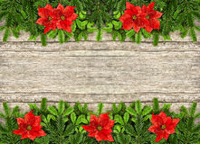 Fresh christmas tree branch and red poinsettia flowers. Fresh christmas tree branches over rustic wooden background. border from undecorated evergreen twigs and Stock Images