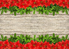 Fresh christmas tree branch and red poinsettia flowers. Fresh christmas tree branches over rustic wooden background. border from undecorated evergreen twigs and Stock Photo
