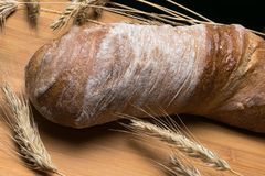 fresh ciabatta bread on wooden table with ears of wheat stock image