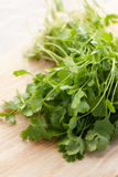 Fresh cilantro Stock Photo