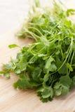 Fresh cilantro Stock Photo