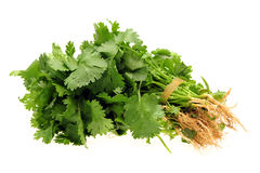Fresh cilantro. Of the background royalty free stock photos