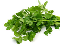 Fresh cilantro bunch Royalty Free Stock Image